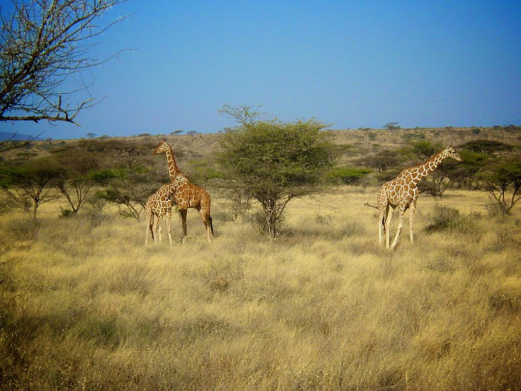 Un voyage vers l'Afrique du Sud avec safarivo.com
