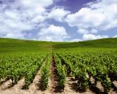 Déguster de nouveaux vins chaque mois avec Abonnementvin.fr